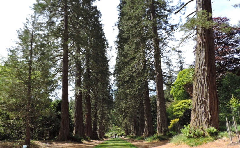 REDWOODS, RHODODENDRONS andmore!